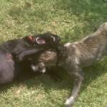 Puppy Play!!!